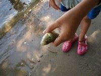 Image of a childs hand holding small fish