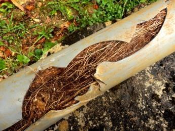 Sewer Root Control